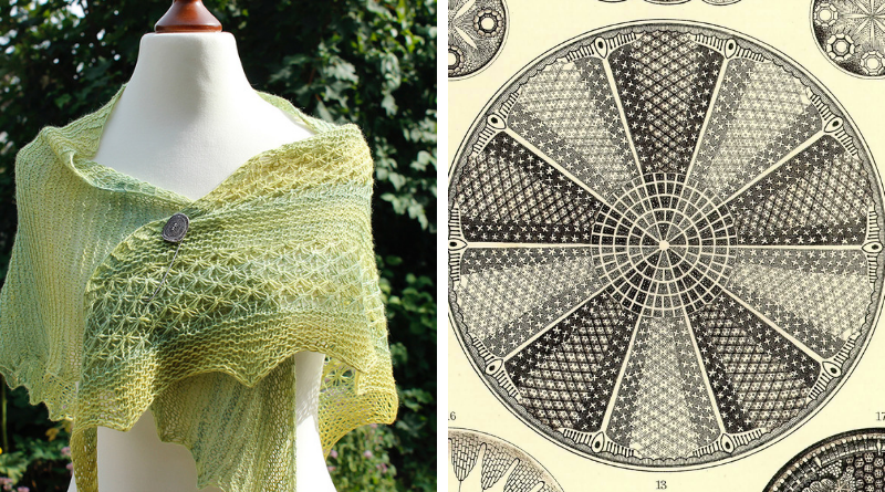 Aulacodiscus Grevilleanus shawl knitting pattern release