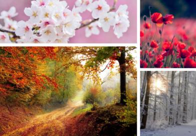 Four Seasons of Shawls